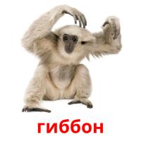 гиббон picture flashcards