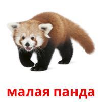 малая панда карточки энциклопедических знаний