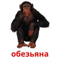 обезьяна picture flashcards