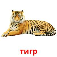 тигр picture flashcards