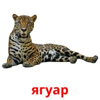 ягуар picture flashcards