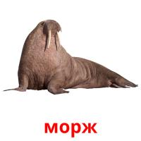 морж picture flashcards