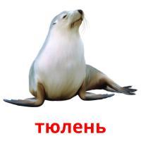 тюлень picture flashcards
