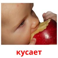 кусает picture flashcards