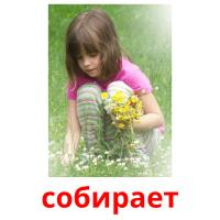 собирает picture flashcards