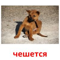 чешется picture flashcards