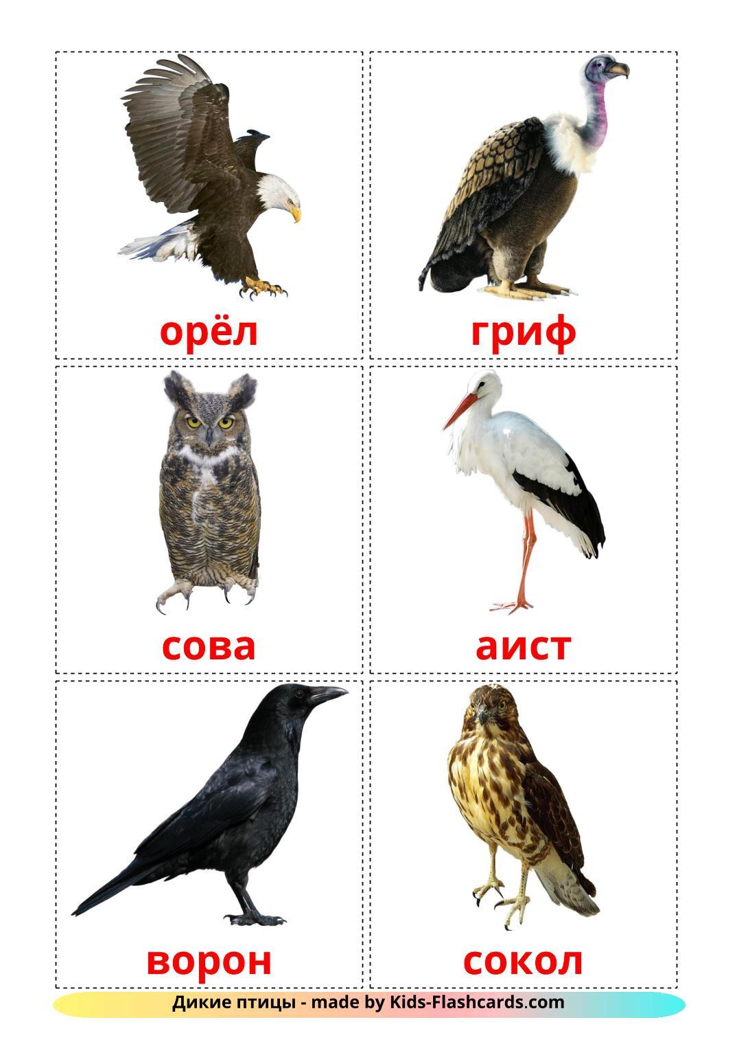 Wild birds - 18 Free Printable russian Flashcards