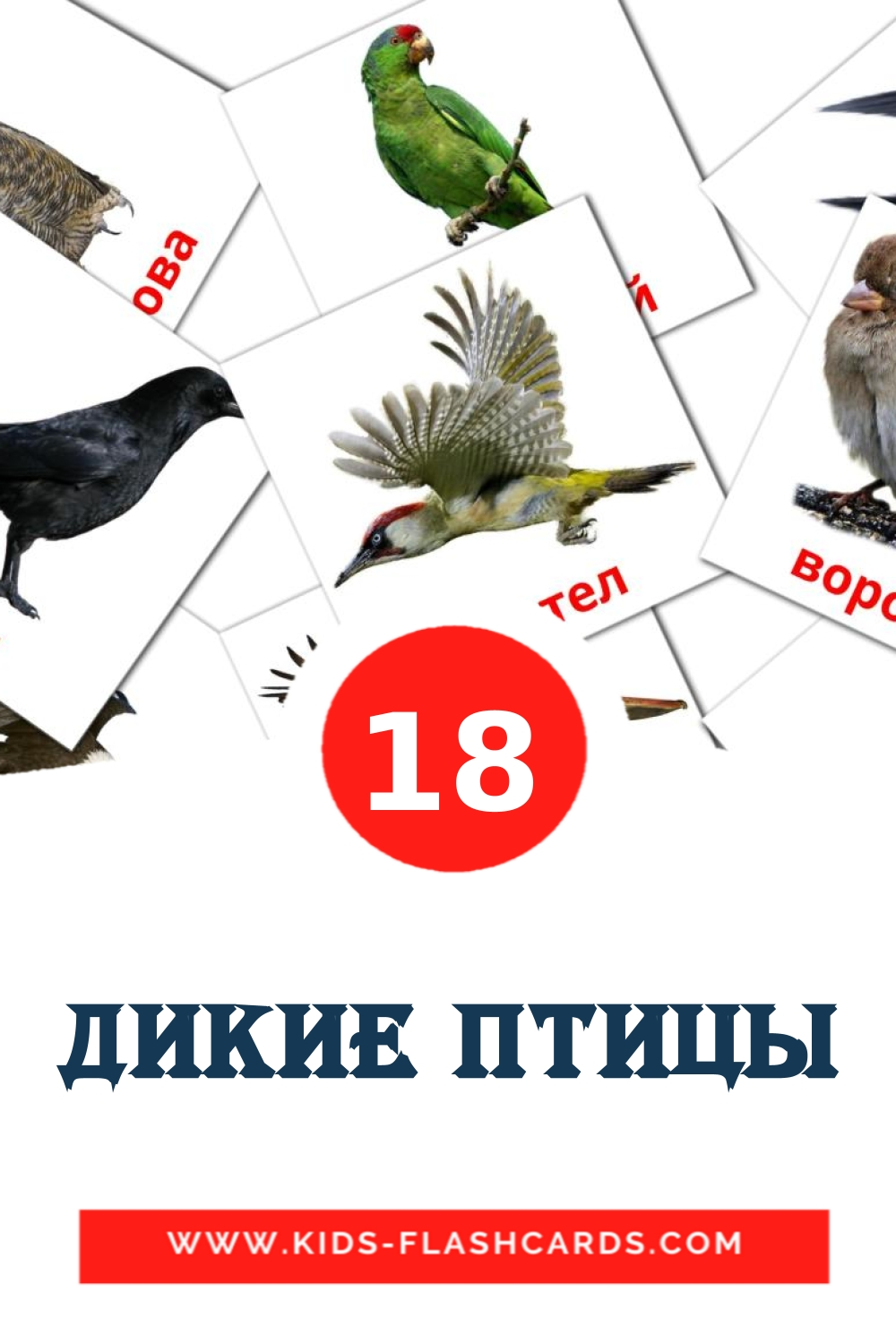 18 Дикие птицы Picture Cards for Kindergarden in russian