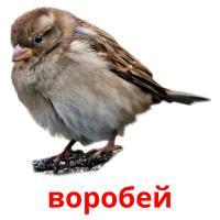 воробей picture flashcards