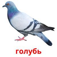 голубь picture flashcards