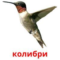 колибри picture flashcards