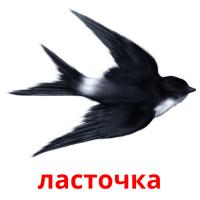 ласточка picture flashcards