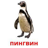 пингвин picture flashcards
