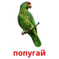 попугай picture flashcards
