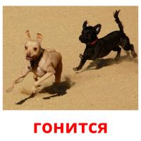 гонится picture flashcards