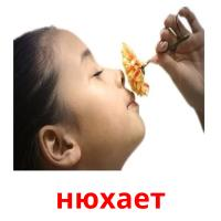нюхает picture flashcards