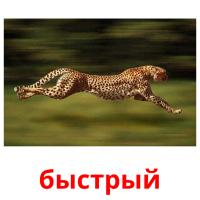 быстрый picture flashcards