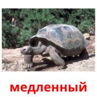 медленный picture flashcards