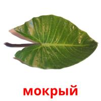 мокрый picture flashcards