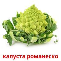 капуста романеско карточки энциклопедических знаний