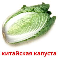 китайская капуста picture flashcards