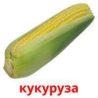 кукуруза picture flashcards