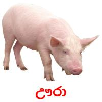 ඌරා picture flashcards
