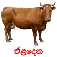ඒළදෙන picture flashcards