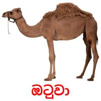 ඔටුවා picture flashcards
