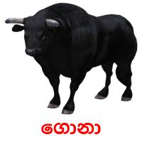 ගොනා picture flashcards