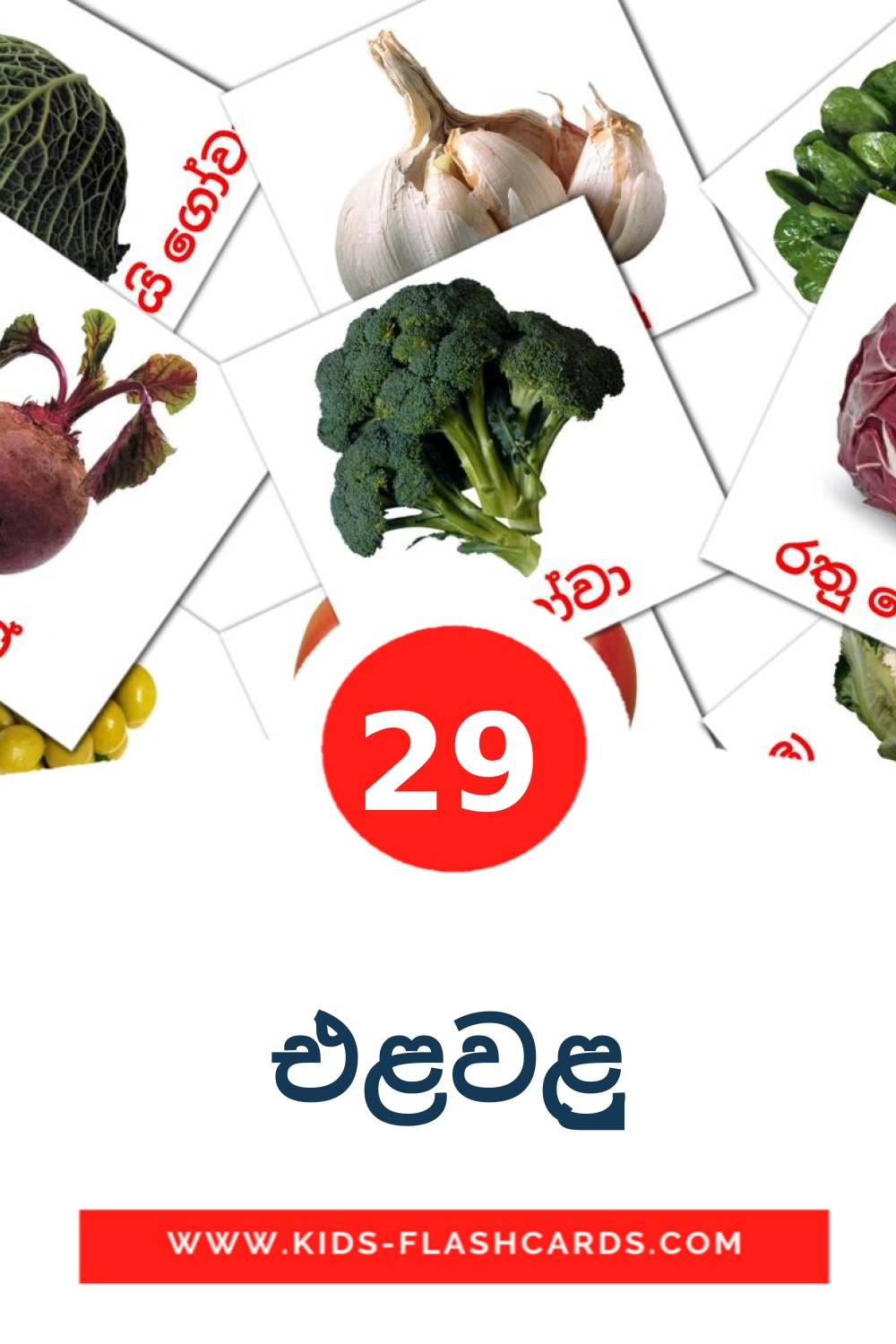 29 එළවළු Picture Cards for Kindergarden in sinhala