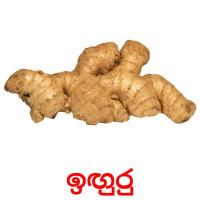 ඉඟුරු picture flashcards