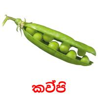කව්පි picture flashcards