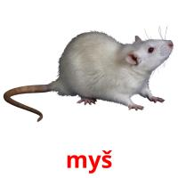 myš picture flashcards