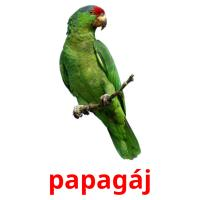 papagáj picture flashcards
