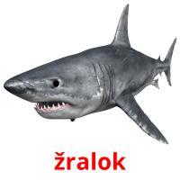 žralok picture flashcards