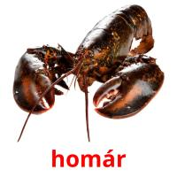 homár picture flashcards