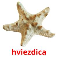 hviezdica picture flashcards