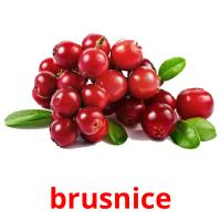 brusnice picture flashcards