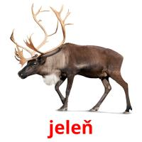 jeleň picture flashcards