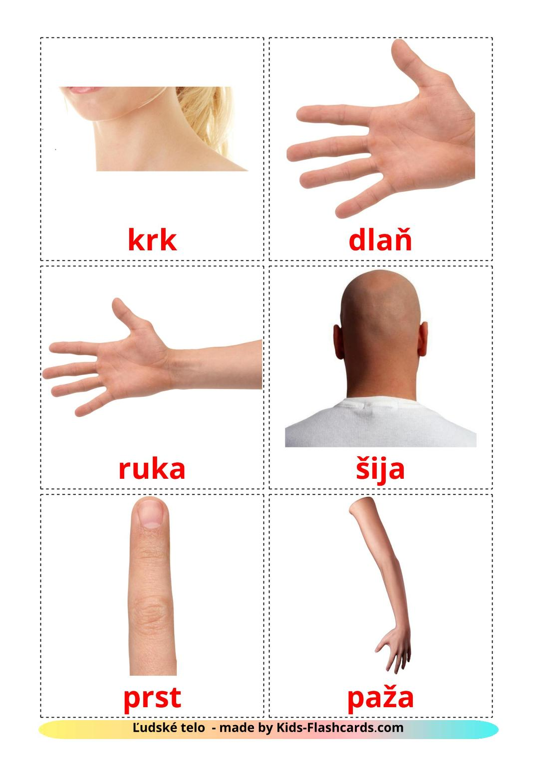 Body Parts - 26 Free Printable slovak Flashcards