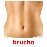 brucho picture flashcards
