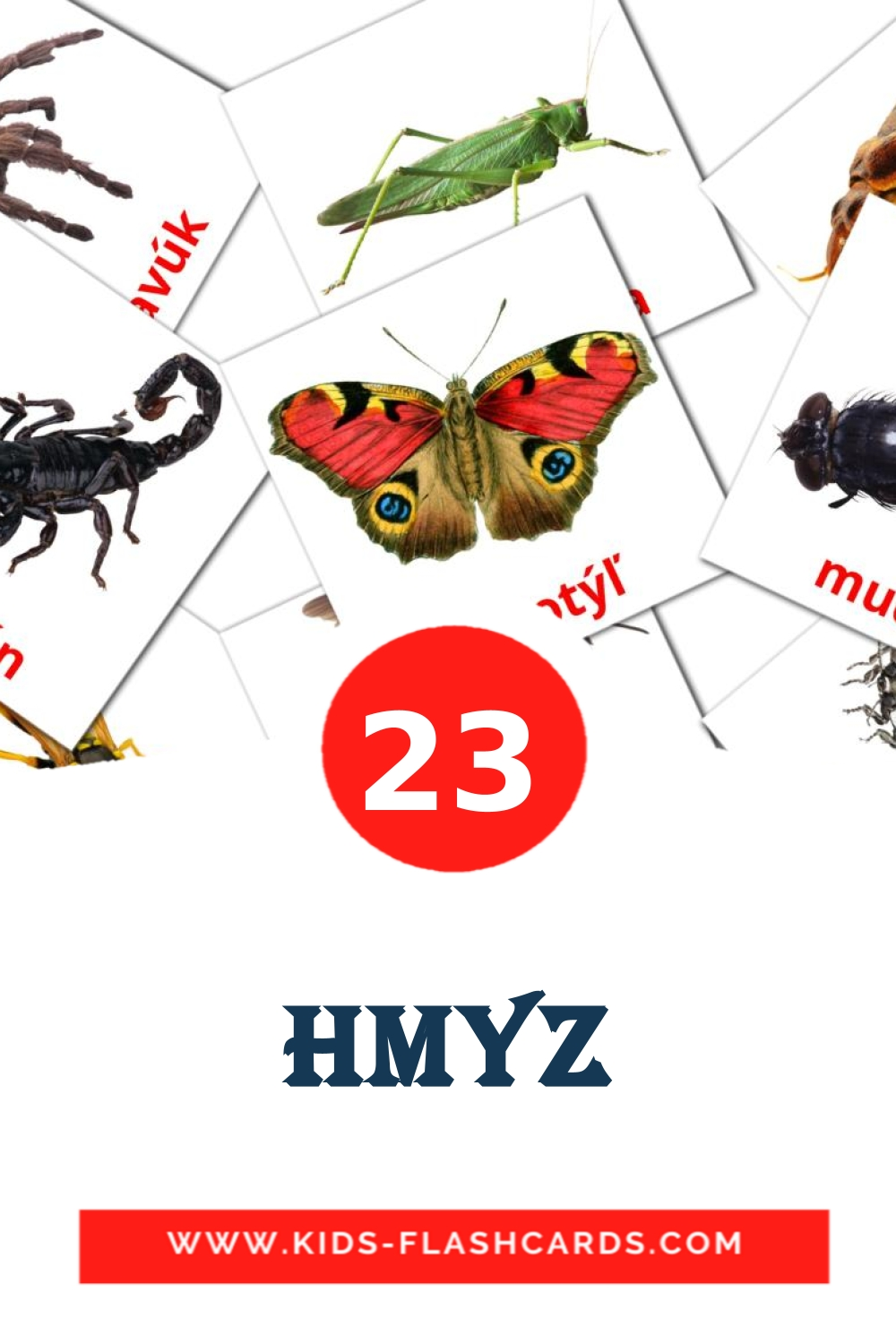 23 Hmyz Picture Cards for Kindergarden in slovak
