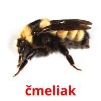 čmeliak picture flashcards