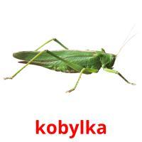 kobylka picture flashcards