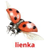 lienka picture flashcards
