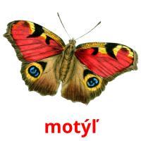 motýľ picture flashcards