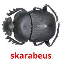 skarabeus picture flashcards