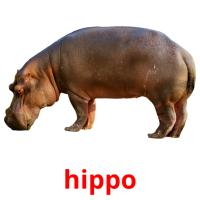 hippo picture flashcards