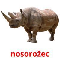 nosorožec picture flashcards